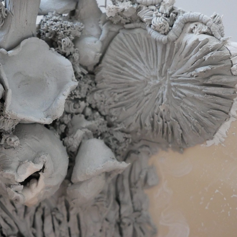 Compost Fungi_04